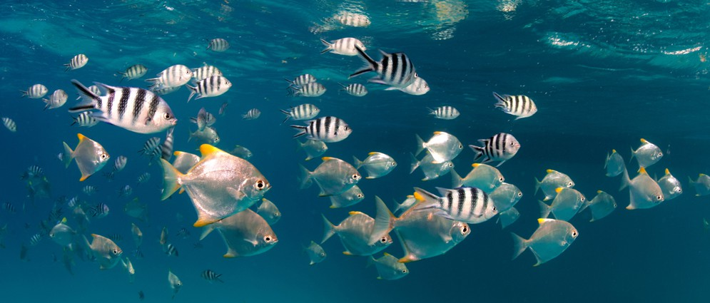 Marine Park Seychelles