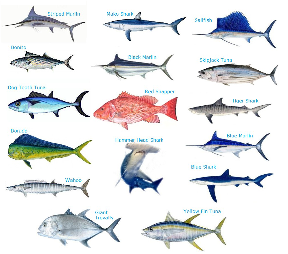 Seychelles Fishes