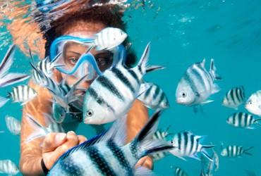 Seychelles Island Snorkelling